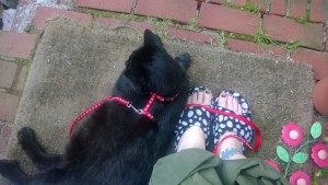 darwin on brick front stoop with me, leash and slippers