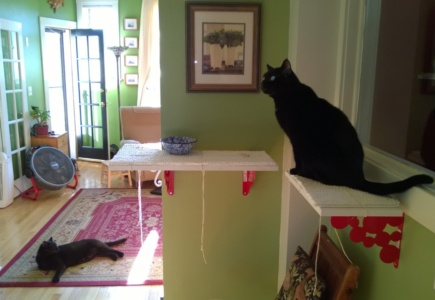 Downstairs Cat Platforms – Part 1