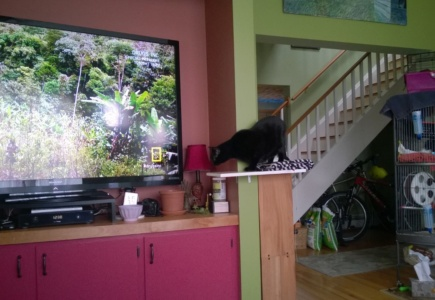 Downstairs Cat Platforms – Part 4