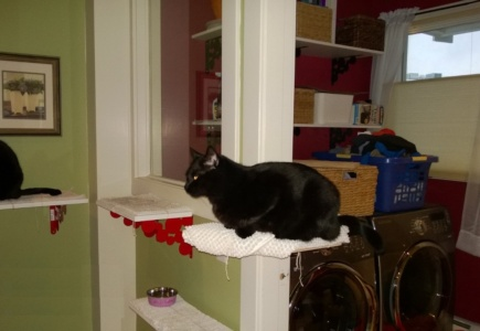 Downstairs Cat Platforms – Part 5