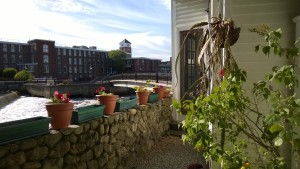 flower pots and orchid cactus in yard with ipswich river and ebsco