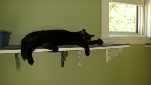 birdie on upstairs hall cat platform