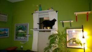 birdie using the living room window cat shelf / platform