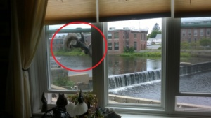 the squirrel climbing up our window to reach the bird feeder