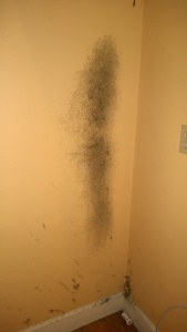 when i moved the fridge away from the wall i found a large colony of black mold!