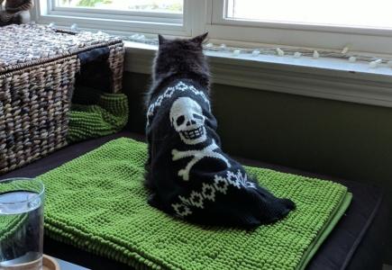 A Cat Update