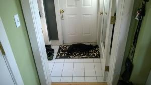 darwin sleeping on the new swirly front entrance hall rug