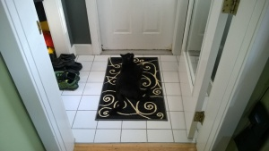 darwin sleeping on the new swirly front entrance hall rug