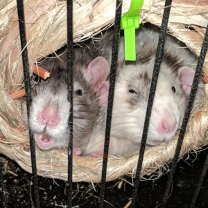 winston and killy snuggling in their rolly nest