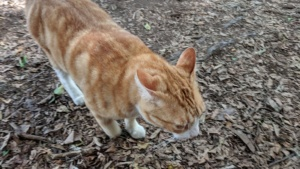 a cat we saw on the road to hana, maui