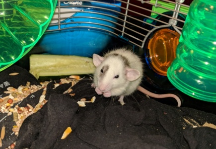 Meet The New Rats!