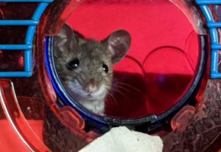 A Mouse Story – Part 3