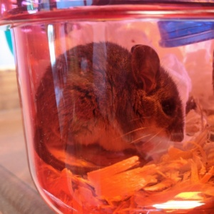 one of the temporary mice i caught in the basement and will release