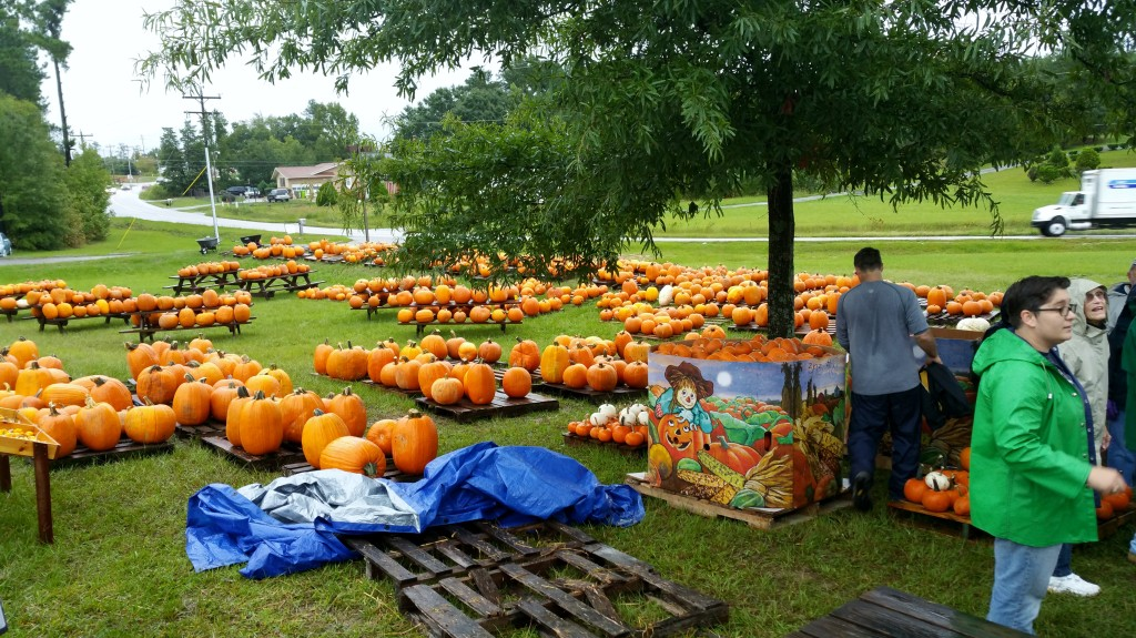 Unloading the pumpkins, 10/2015