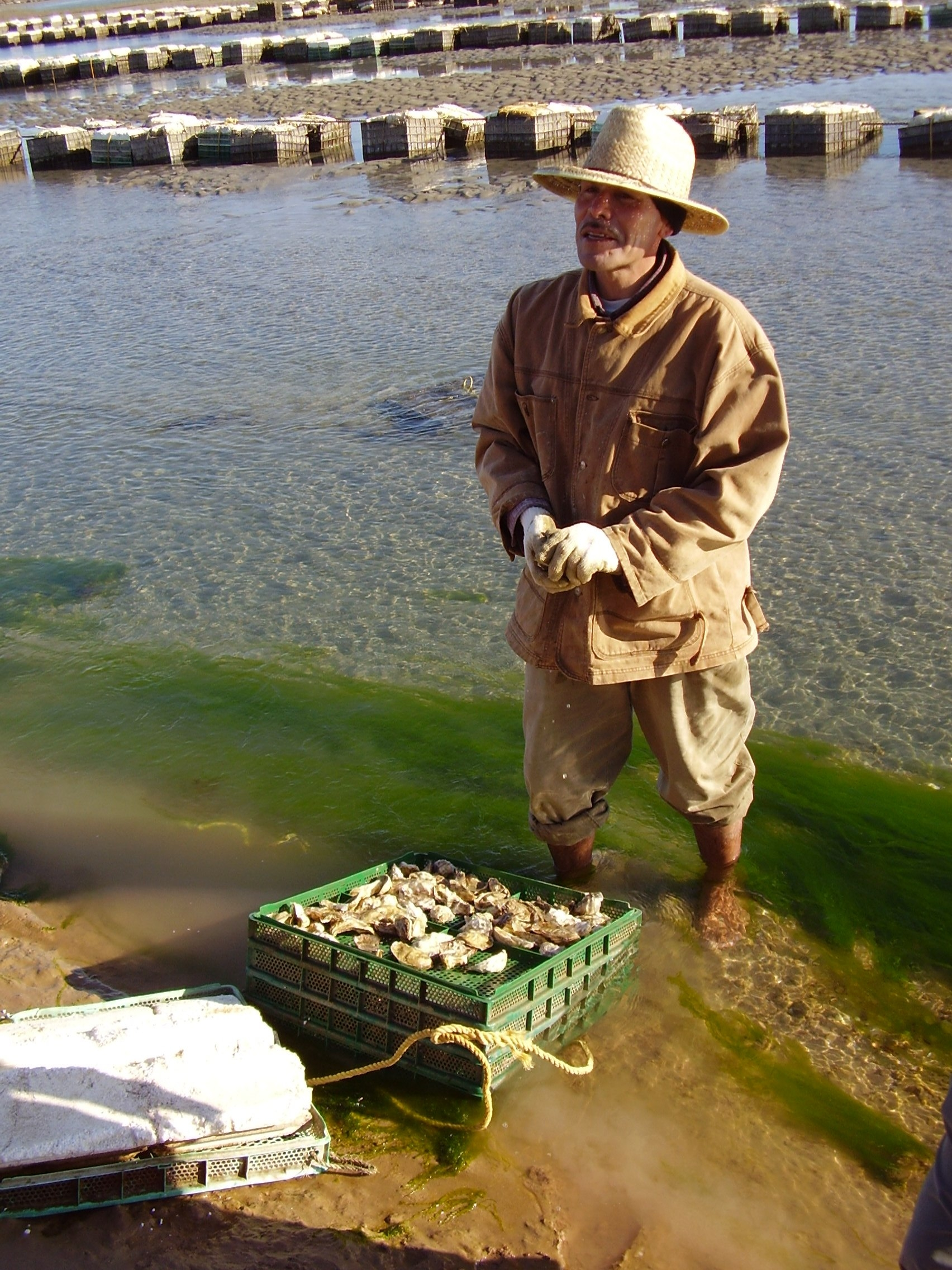 Oyster Experience / Experiencia Ostión