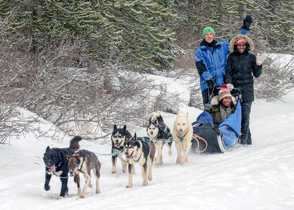 Dog Sledding in Banff