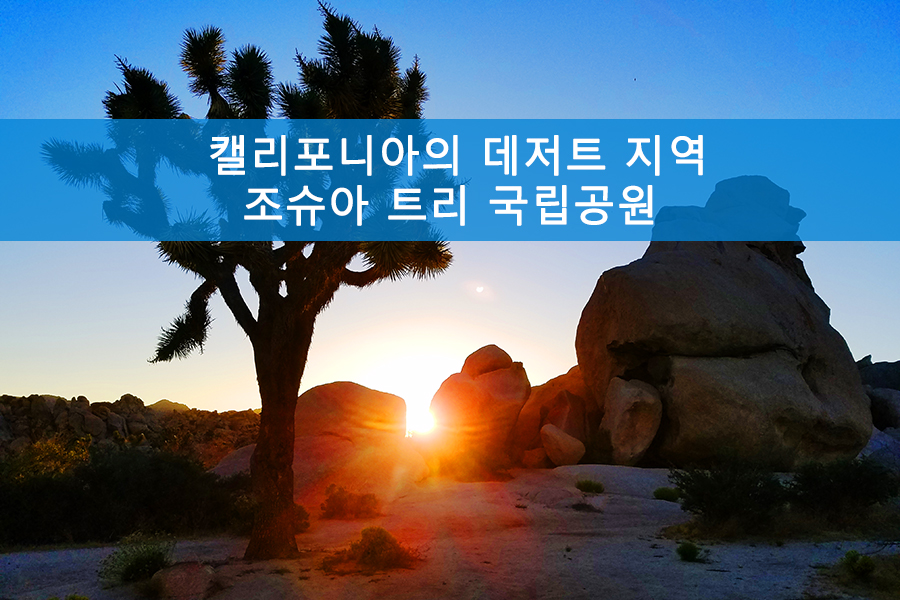 캘리포니아의 데저트 지역-조슈아 트리 국립공원