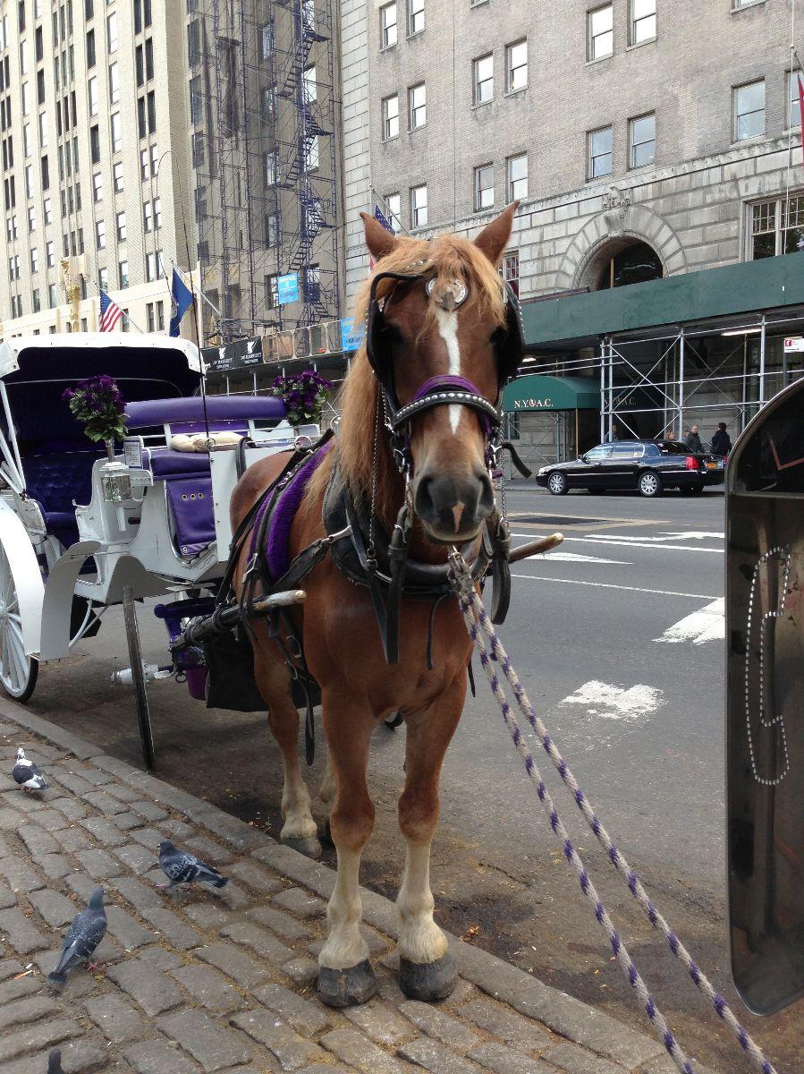 Horse, central park, kristixoxo
