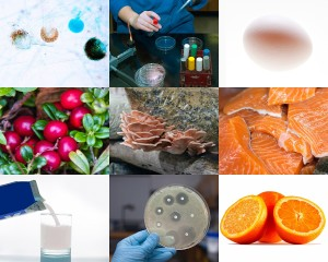 Food safety collage