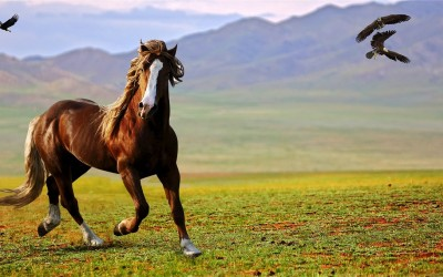 Horse Feeding Tips – What Should you Feed?