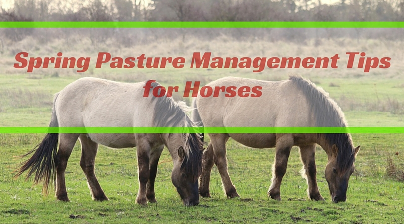 Spring Pasture Management Tips for Horses