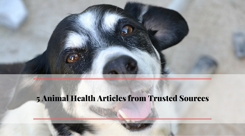 5 Animal Health Articles from Trusted Sources
