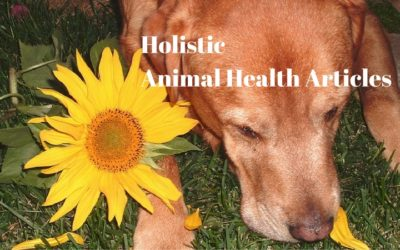 Animal Health Articles from Trusted Sources Issue #3