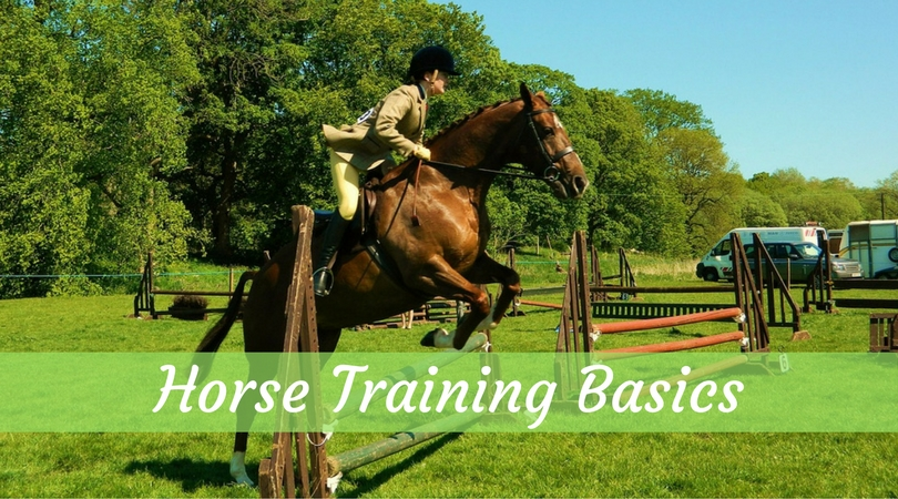 Training Aggressive Horses – Horse Training Basics for Beginners Part III