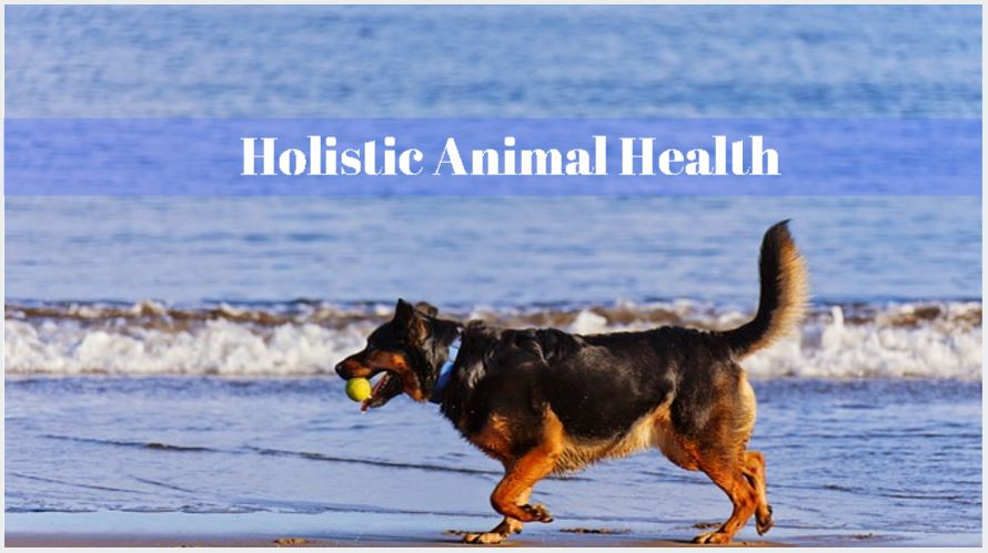 Animal Health Articles from Trusted Sources Issue #4