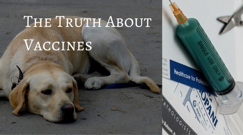 The Truth about Vaccines that your Vet won't Tell You!