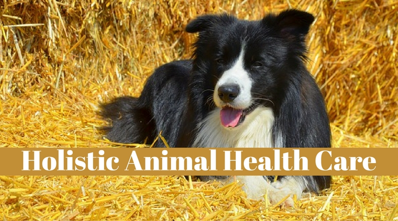 holistic animal health care