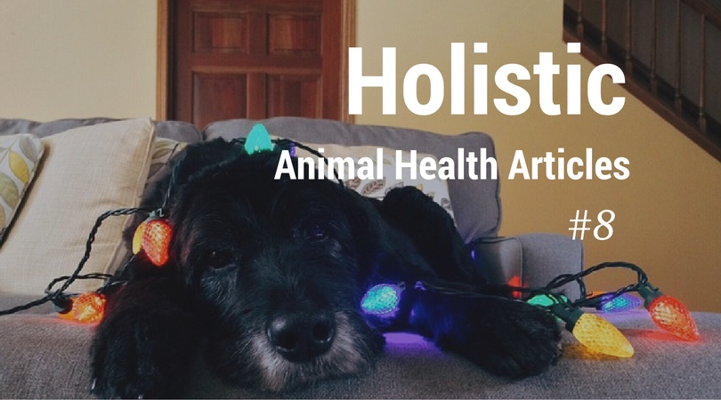 holistic animal health