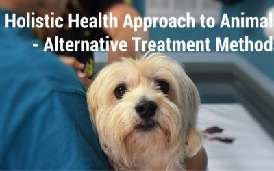 Holistic Health Approach to Animals – Alternative Treatment Methods