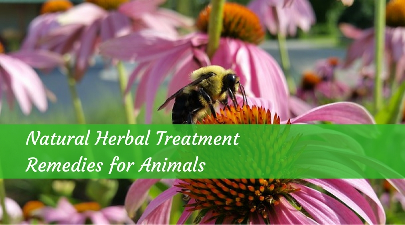 Natural Herbal Treatment Remedies for Animals