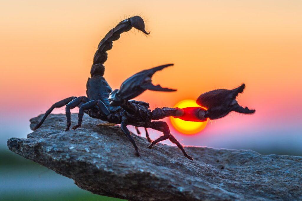 Sol em Escorpião Mega Astrologia