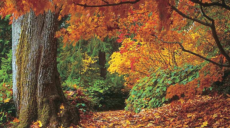 leaves turn colour nature