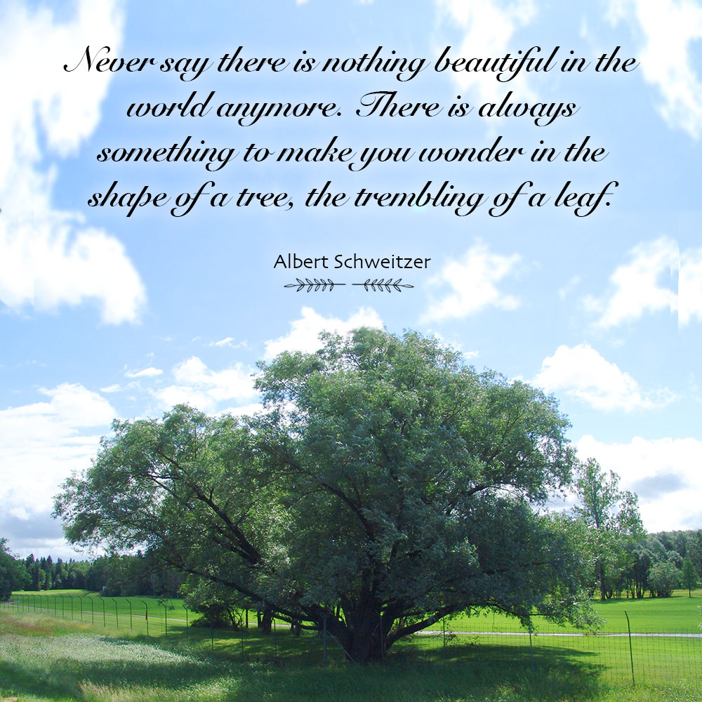 Never say there is nothing beautiful in the world anymore. There is always something to make you wonder in the shape of a tree, the trembling of a leaf. ~ Albert Schweitzer