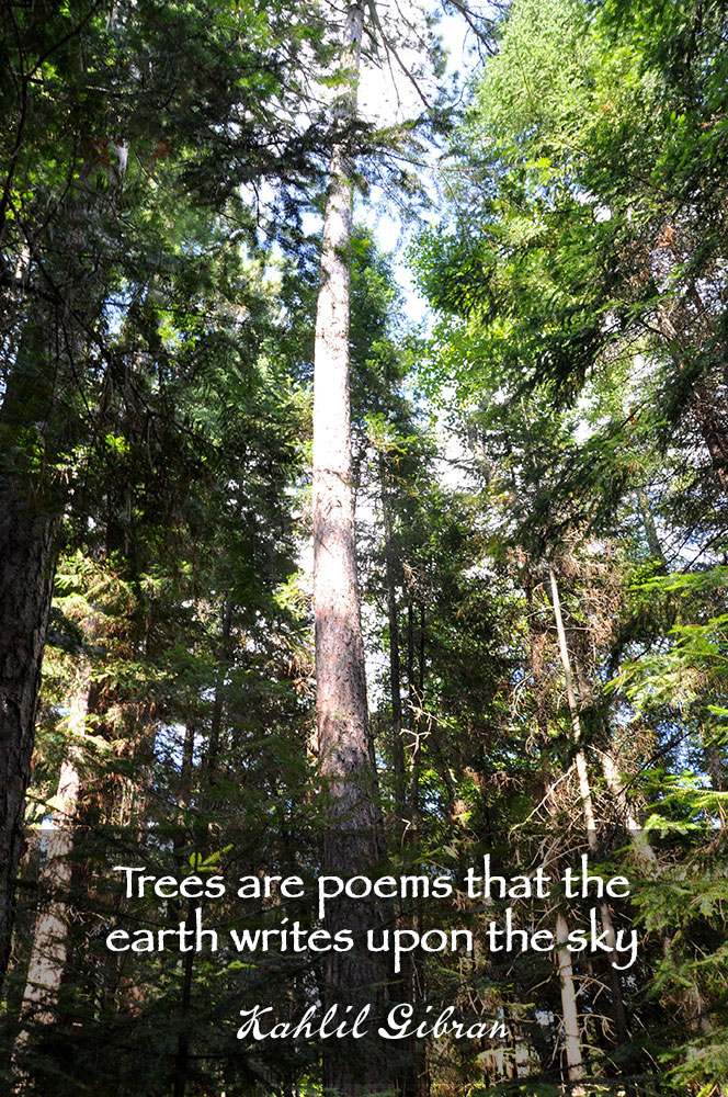 Trees are poems that the earth writes upon the sky. ~ Kahlil Gibran