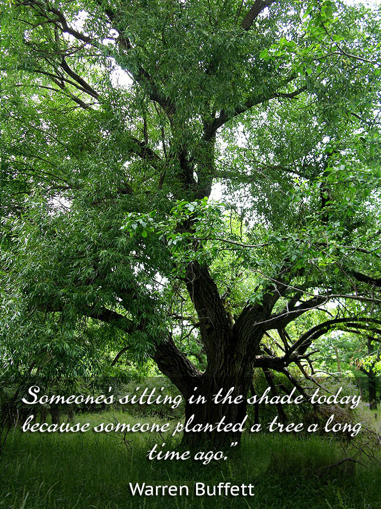 Someone's sitting in the shade today because someone planted a tree a long time ago. ~Warren Buffett