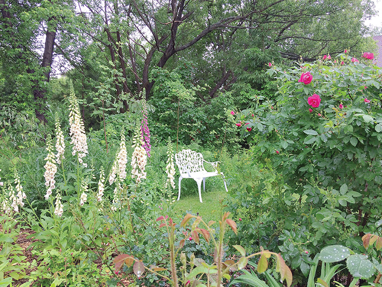 The Sudbury Horticultural Society 2017 Open Garden weekend included Michel's collection, over 200 people attended.