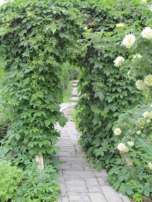 rose garden of Ontario An arbour draped in ivy adds to the romance.