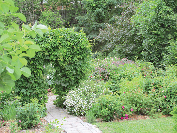 The lush garden is a reflection of Michel's care and commitment. Rose garden of Ontario