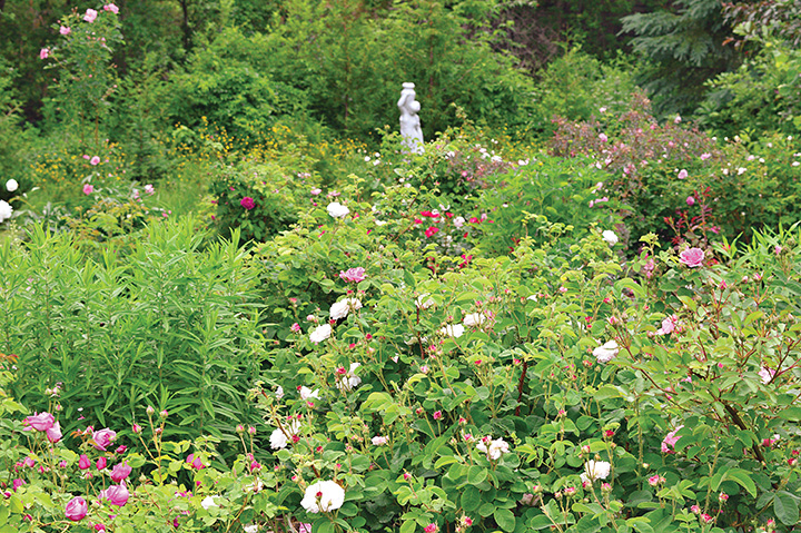 The garden features over 200 different varieties of roses - many of which were chosen for their ability to thrive in northern Ontario's climate.