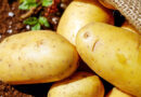 Baby Potatoes