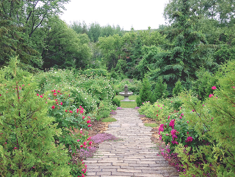 The garden has been surrounded by a thick wall of trees, giving it a sense of seclusion and creating a micro-climate that protects the roses.