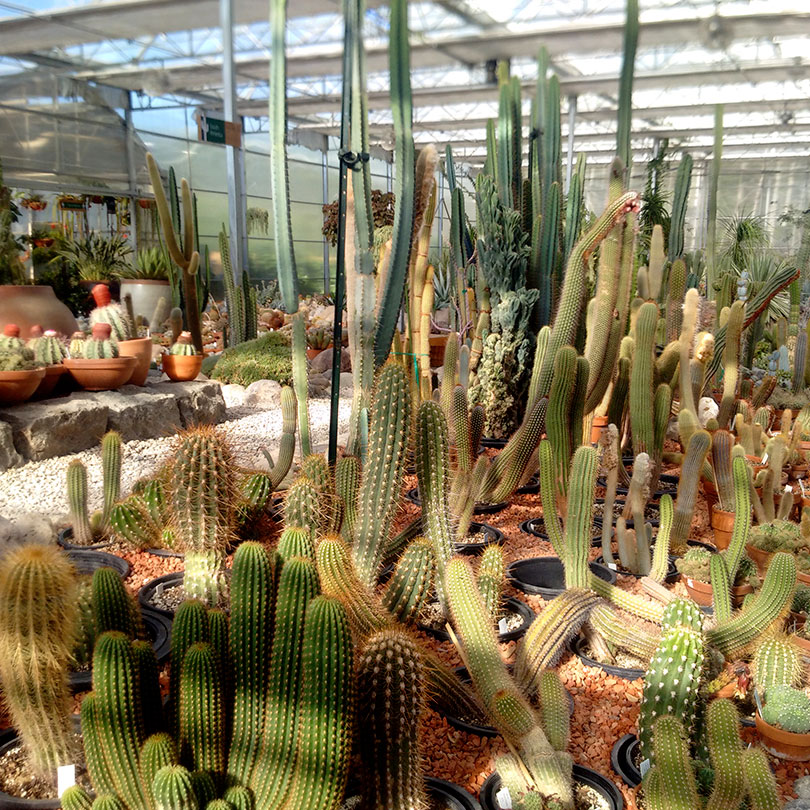 10 Neat Things about succulents Cactus collections at the International peace gardens