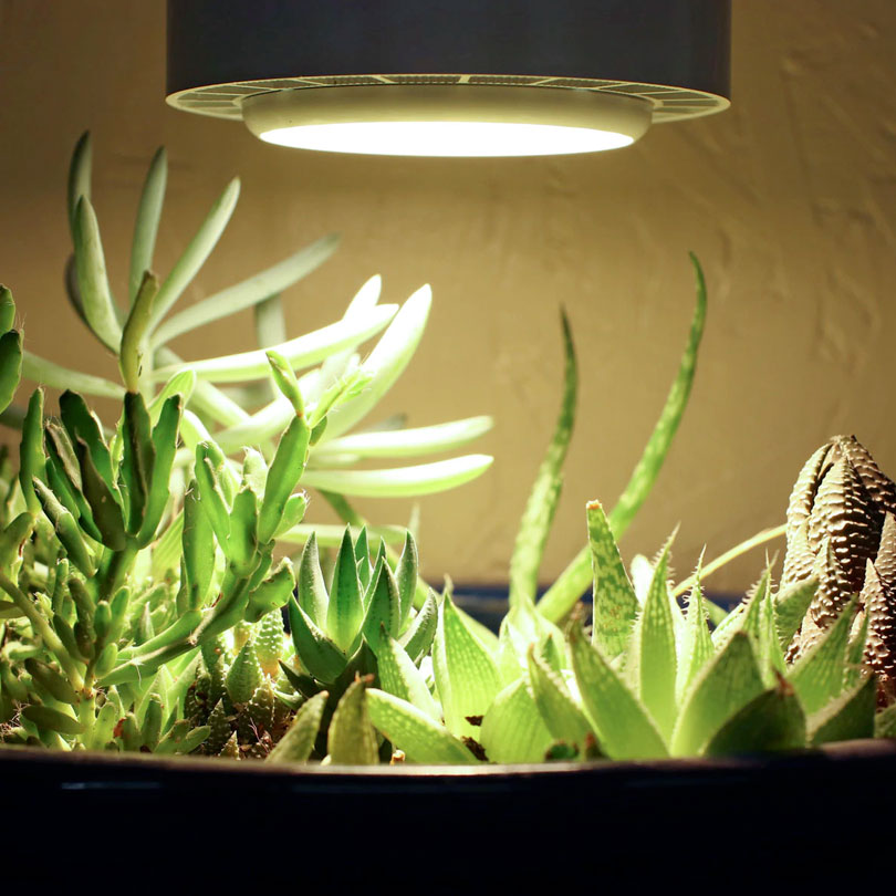 10 neat things about succulents indoor