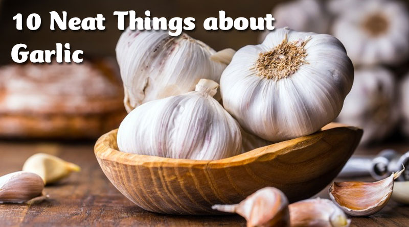 10 Neat Things about Garlic