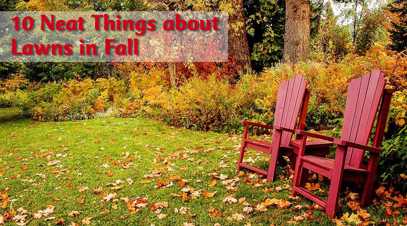 10 Neat Things about Lawns in Fall