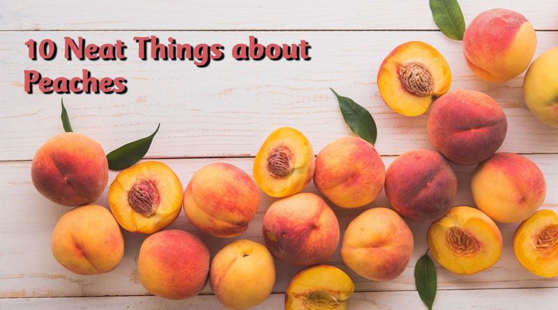 10 Neat Things about peaches
